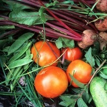 9 Reasons For Growing Your Own Vegetables | Organic Vegetables Sunshine Coast | Scoop.it