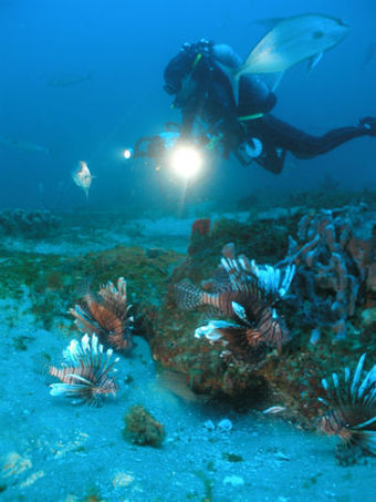 NOAA, UNC-Wilmington study finds warming Atlantic ocean temperatures could increase expansion of invasive native species | Climate Change and the Oceans | Scoop.it