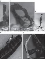 Une tour de vers bien décidée à s'accrocher au premier coléoptère venu   EntomoNews   Scoop.it