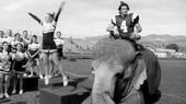 Tai the Elephant, Veteran of Nearly 10 Films, with the U.S.C. Song Girls | Wildlife Trafficking: Who Does it? Allows it? | Scoop.it