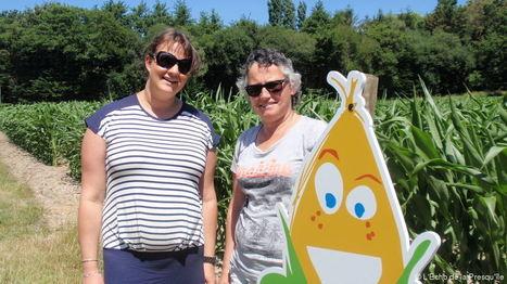 Saint-Molf Nouveau : un labyrinthe de maïs ! | Actus en Bretagne Plein Sud | Scoop.it