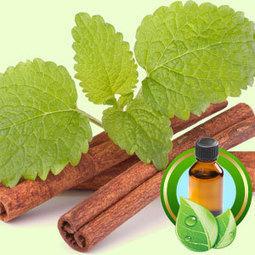 Cinnamon Leaf Ceylon ESSENTIAL OIL | Essential-Oils | Scoop.it