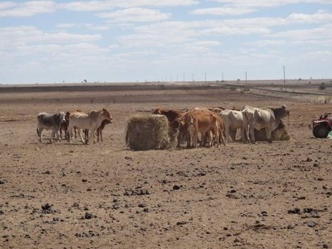 Let's Get Behind Our Farmers – Australian Drought Appeal | Eireka Equipment Sales | Construction Equipment | Scoop.it