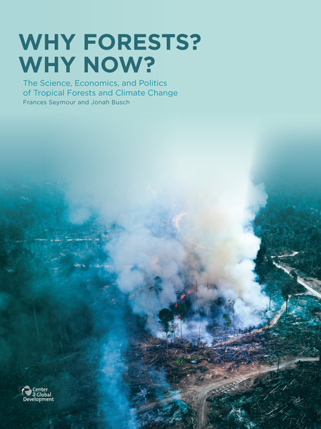 Why Forests? Why Now? A Preview of the Science, Economics, and Politics of Tropical Forests and Climate Change | Forests | Scoop.it
