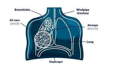COPD | Chronic Obstructive Airways Disease | Scoop.it