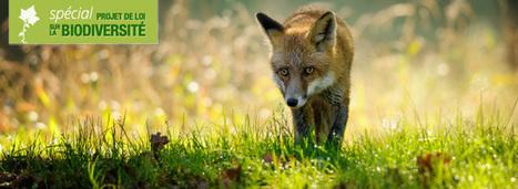 Loi biodiversité: ce qui va faire débat entre le Sénat et l'Assemblée   Confidences Canopéennes   Scoop.it