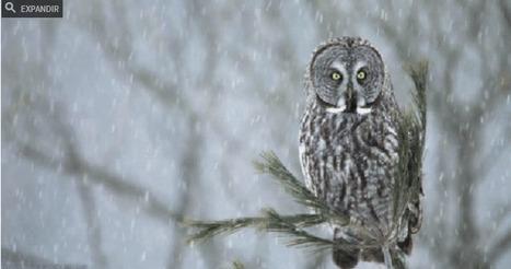 Fascinantes GIFs de la naturaleza animados hasta el infinito | Erika Guerrero | Scoop.it