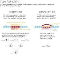 Right on target: New era of fast genetic engineering - life - 28 January 2014 - New Scientist | leapmind | Scoop.it