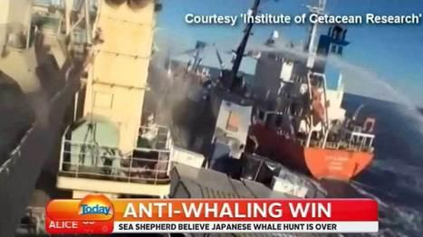 Anti-whaling win | Life on Earth | Scoop.it