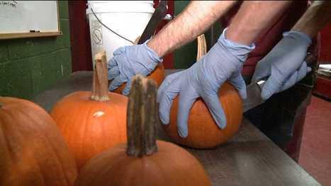 Pumpkins Going Under the Knife for Beer   Food   Scoop.it