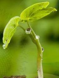 Agronutrition et LCA vont créer un laboratoire de chimie verte | Production végétale | Scoop.it