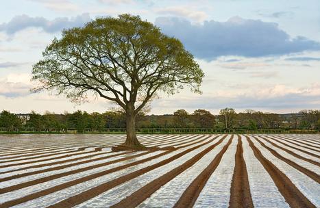 Las 5 tendencias agrícolas para el 2016   Agricultura   Scoop.it