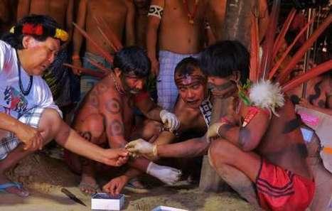 Brésil : Restitution d'échantillons de sang prélevés sur les Yanomami il y a près de 50 ans   Survival International   Kiosque du monde : Amériques   Scoop.it