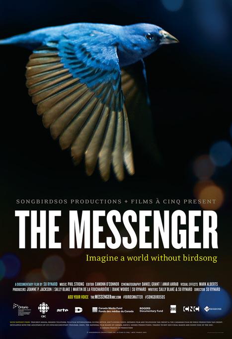 The Messenger, le silence des oiseaux | Nouveautés DVD de la BU Sciences-Pharmacie Tours | Scoop.it