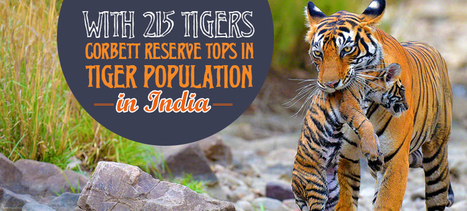 With 215 Tigers Corbett Tops in Tiger Population in India | India Travel & Tourism | Scoop.it