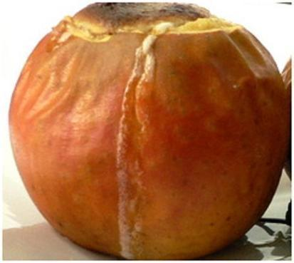 Food for Health: Delicious Recipes, Healthy Snacks Baked Apples | Health, Vegetarians, Natural | Scoop.it