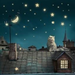 Animals in Children's Books | Lanesha Says... | Animals R Us | Scoop.it