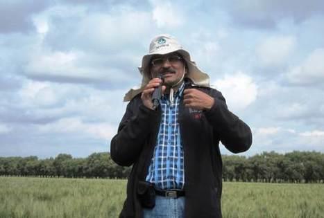 CIMMYT wheat scientist Ravi Singh receives honor for wheat genetics, breeding | Food Security | Scoop.it