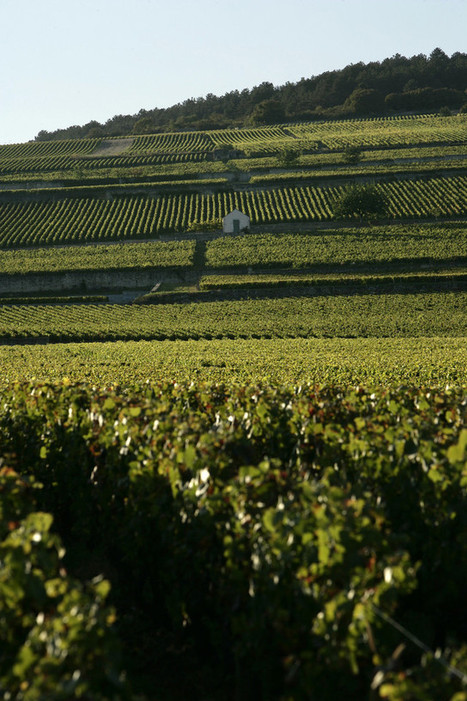 White Burgundies From Cote d'Or Set Gold Standard | Vitabella Wine Daily Gossip | Scoop.it