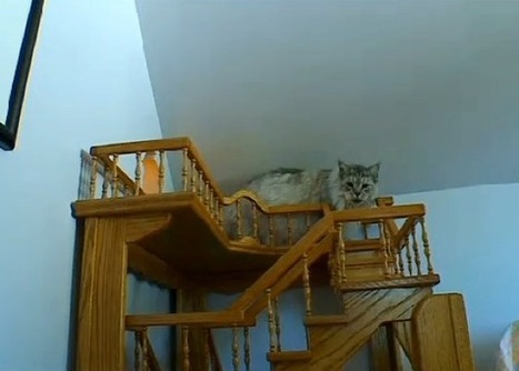Man Spent 15 Years Building A House For His Cats - Love Meow | Cats Rule the World | Scoop.it