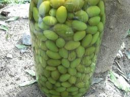 Les 15 variétés d'olives du Languedoc Roussillion | oléiculture | Scoop.it