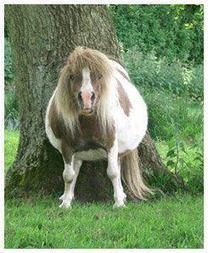 Les gros poneys sont les plus méchants | Life and Horses | Cheval | Scoop.it