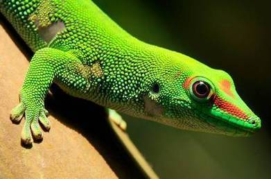 Satellite full of sexually experimental geckos adrift in space, Russia loses control of mission | The Weird, Strange and Bizarre | Scoop.it
