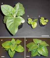 A faster Rubisco with potential to increase photosynthesis in crops | Research | Scoop.it