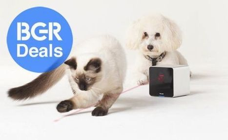 Yup, even your pet's favorite toy is connected now (Boy Genius Report) | Internet of Things & Wearable Technology Insights | Scoop.it