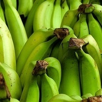 Philippine bananas hit U.S. shores | Banana market | Scoop.it