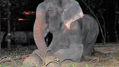 Raju the elephant slave meets his new family for the first time | Garry Rogers Nature Conservation News | Scoop.it