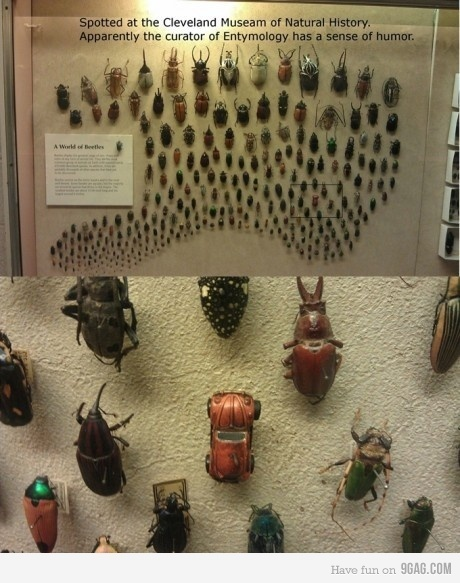 Spotted this at the Cleveland Museum of Natural History | Biology@BellaOnline | Scoop.it