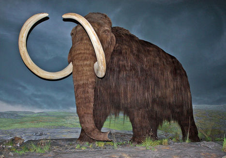 Will resurrecting a mammoth be possible?   Beyond the cave wall   Scoop.it