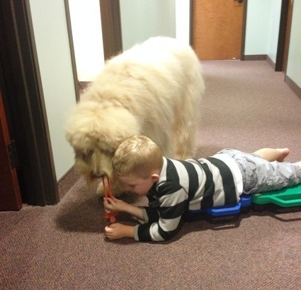 Occupational Therapy in Murphy with Animal Assisted Therapy in Pediatrics | Richardson Occupational Therapy | Scoop.it