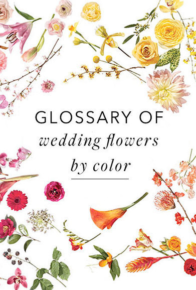 (EN) A #Glossary of Wedding Flowers by Color | 1001 Glossaries, dictionaries, resources | Scoop.it