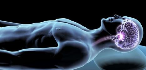 Les échanges hippocampe-cortex pendant le sommeil consolident la mémoire | DORMIR…le journal de l'insomnie | Scoop.it