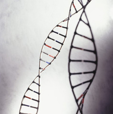 Researchers get unprecedented look at DNA damage | Fragments of Science | Scoop.it