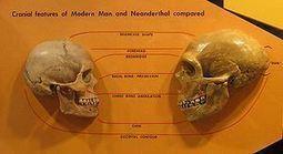 Neanderthal   Café Amargo   La Evolución Humana   Scoop.it