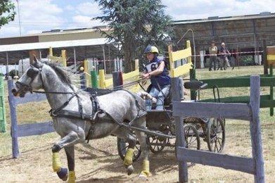 Le Championnat du monde d'attelage de poneys commence ce ... - Sud Ouest   Cheval et sport   Scoop.it