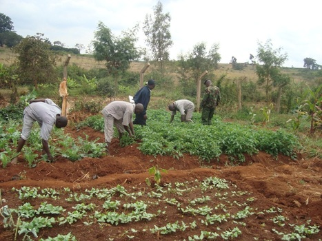 GreenMicrofinance Global, Ltd. | Climate-Smart Africa | Scoop.it