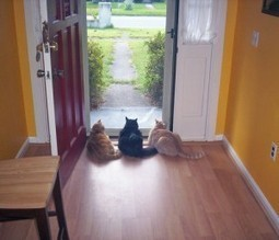 Why Hire a Professional Pet Sitter? - Upward Dog Pet Sitting | General Health & Fitness | Scoop.it