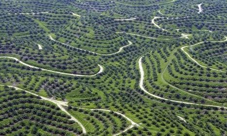Wilmar's 'no deforestation' goal could revolutionise food production | Sustain Our Earth | Scoop.it