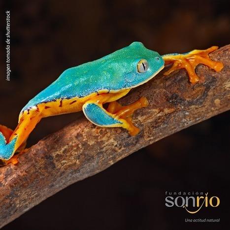 Fundación Sonrío - La diversidad biológica colombiana, una oportunidad de desarrollo sustentable.   Ecología   Scoop.it