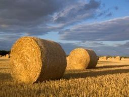 Are straw bales the future of sustainable building? | sustainable architecture | Scoop.it