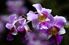 Are you an orchid or a dandelion? | Wall Street Journal | CALS in the News | Scoop.it