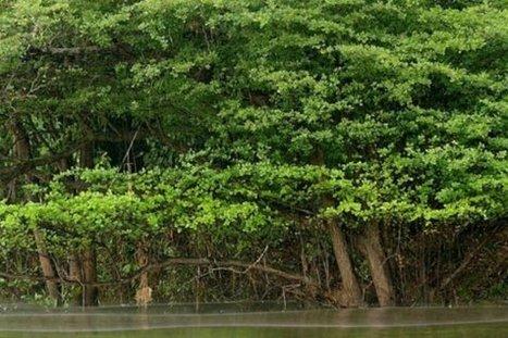 Desaparición de bosques inundados amenaza peces en el Amazonas - Radio Chécheres | Agua | Scoop.it