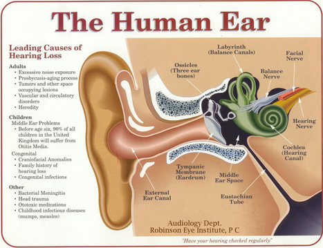 The most important part of any sound system: your ears and brain. Hearing explained | HeadMania | Scoop.it