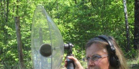 Elle écoute autrement le chant des oiseaux | DESARTSONNANTS - CRÉATION SONORE ET ENVIRONNEMENT - ENVIRONMENTAL SOUND ART - PAYSAGES ET ECOLOGIE SONORE | Scoop.it