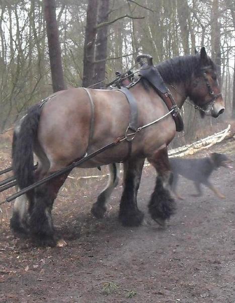 Le cheval dans tous ses états, ce week-end, à Villereau - La Voix du Nord   Cheval Orne   Scoop.it