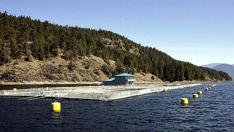 Virus sparks quarantine on B.C. salmon farm - Technology & Science - CBC News | Vertical Farm - Food Factory | Scoop.it